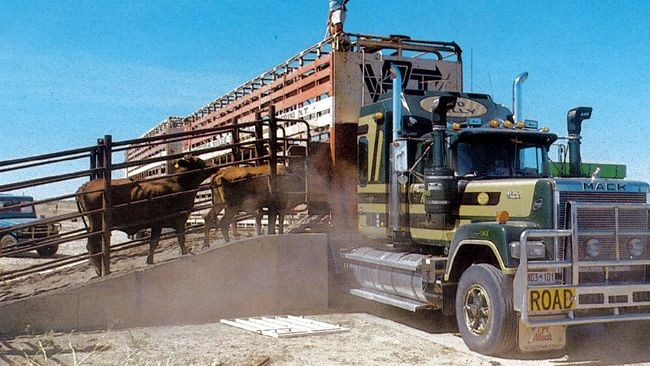 8 Things You Never Knew About Cattle Transportation
