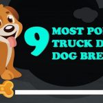 INFOGRAPHIC: 9 Most Popular Truck Driver Dog Breeds