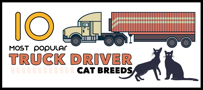 infographic-10-most-popular-truck-driver-cat-breeds-c