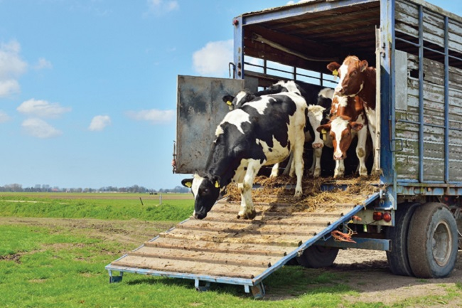 Livestock Hauling – 10 Amazing Things You Want To Know