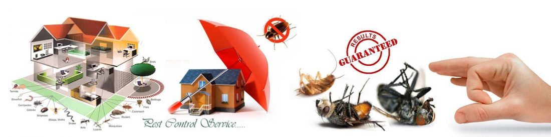 10 Steps To Selecting The Best Pest Control Service Cover Image