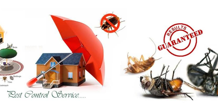 10 Steps To Selecting The Best Pest Control Service